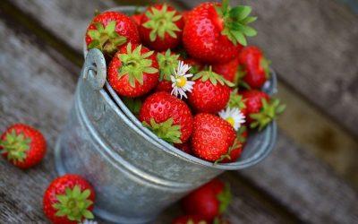 Les bons outils de jardinage et les bonnes pratiques pour conserver toutes les propriétés des cultures